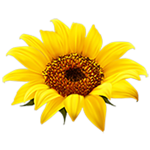 Why Strictly out-danced the sunflowers…